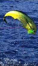 http://www.sandokanpesca.com.ar/imagenes/consejos1.jpg
